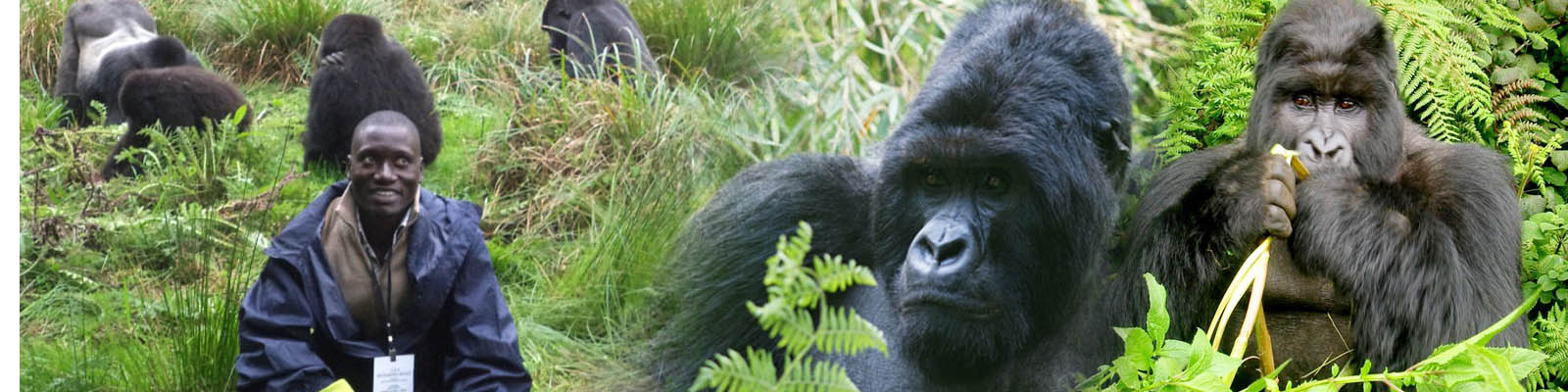 rwanda-gorilla-trekking-safaris